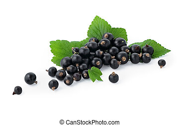 black currant with green leaves on a white background isolated