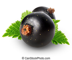 Black currant with leaves