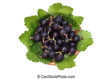 black currants and green leaves on white background