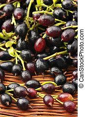 Black currants - Heap of fresh black currants in wicker tray...