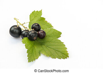Black currants on white with leaf and natural shadow