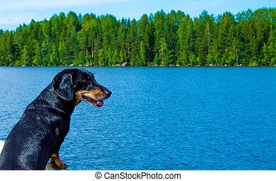 Black dachshund in a boat