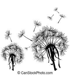Black dandelion in the wind