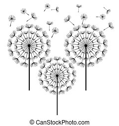 Black dandelions isolated on white background