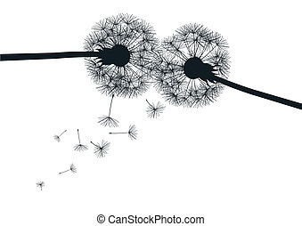 black dandelions on white