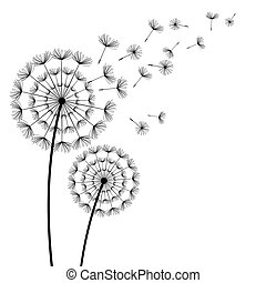 Black dandelions with flying fluff on white background