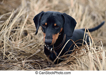 black dog in autumn grass
