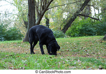 Black dog in the woods.