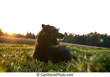 Black dog on a meadow
