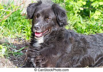 Black dog on a sunny day