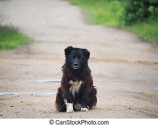 black dog on the road