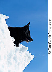 Black dog on white snow