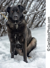 Black dog pooch in winter