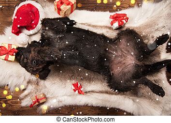 Black dog posing in santa outfit, Christmas time.