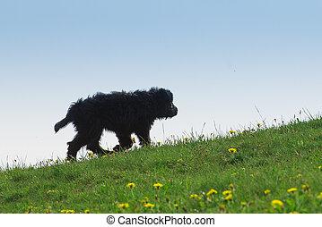Black dog puppy