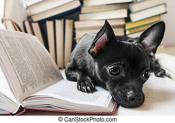 Black dog reading book in lib