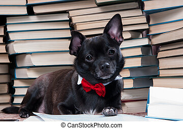 Black dog reading book