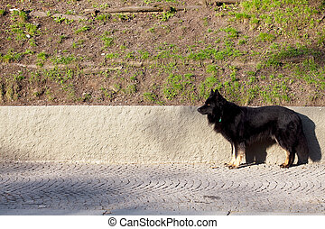 black dog standing on the pavement