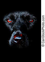 Black Dog - Portrait of a black dog in low key