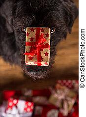 Black dog with christmas gift