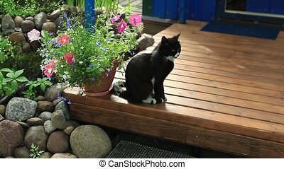 black domestic cat cat on a terrace