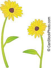 Two Black Eyed Susan flowers.