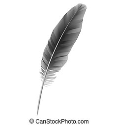 Black feather - Vector illustration of black feather
