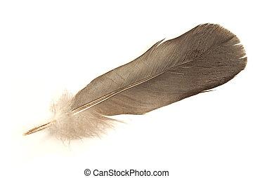 Black feather isolated on white background
