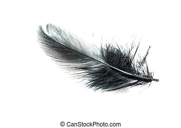 Black feather isolated
