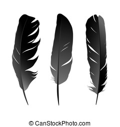 Feather - Black Feather on white background vectr