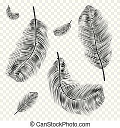 Black Feather vector