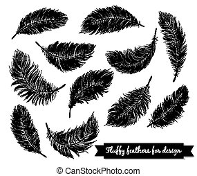 Black feathers - Fluffy black feathers on white background...