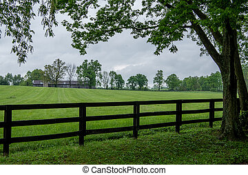 Black Fence and Tree Guard The Edge of a Pasture