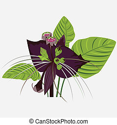 black flower of devil with leaves
