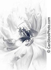 Black flowers peonies