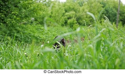 black fluffy cat with beautiful eyes jumps out of an ambush in the grass slow motion.