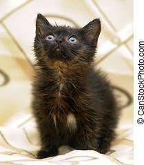 black fluffy kitten on a light background