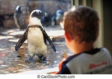 Jerusalem Biblical Zoo - Black-footed penguin in Jerusalem ...
