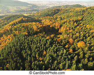 black forest at autumn