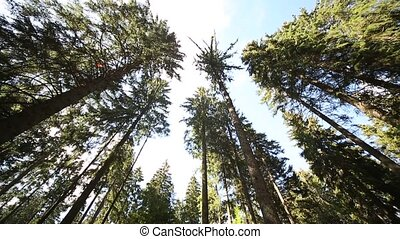Black Forest, Germany - Video Footage of the Black Forest in...