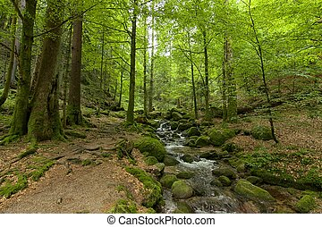 Black Forest Hiking Trail 02 - Ancient Black Forest hiking...
