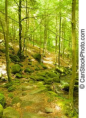 Black Forest hiking trail