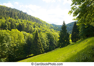 Idyllic green Black Forest meadow with firs and hills