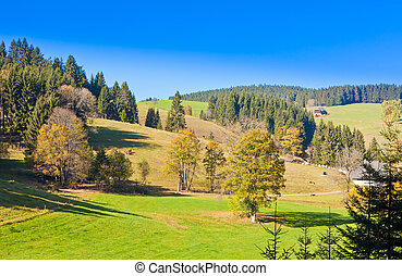 Black Forest Landscape - Farmland, farm houses and forested...