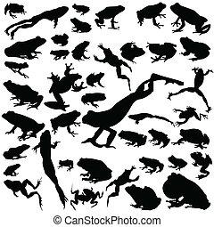 Black frog set on white background