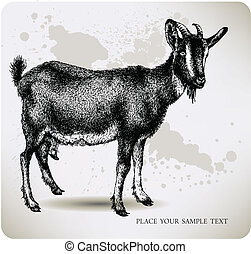 Black goat with horns, hand-drawing