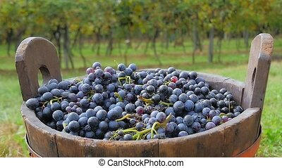 black grapes and basket