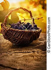 Black grapes - Food background. Grapes and vine leaf in...