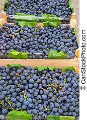 Black grapes in crates
