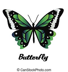 Black Green Butterfly White Background Vector Image